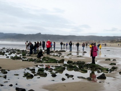 Tide pools at Cannon Beach.