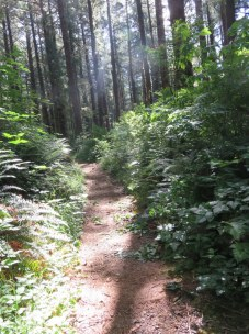 Sun-dappled trail, level and easy.