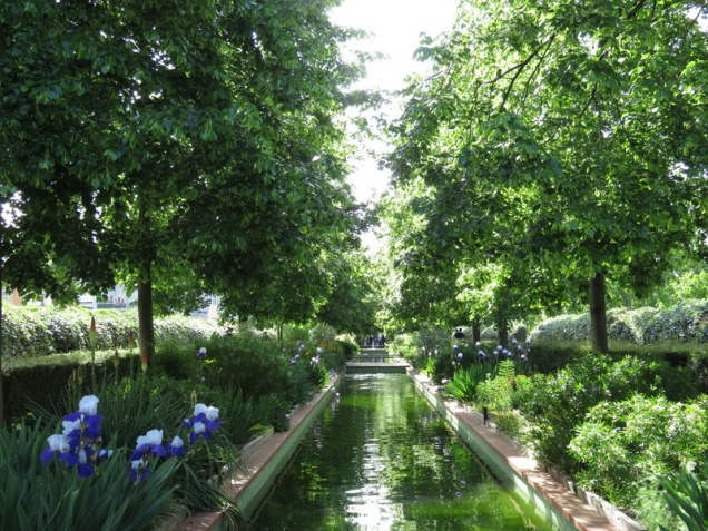 A water feature graced by gorgeous, perfect irises. The space is immaculately maintained.